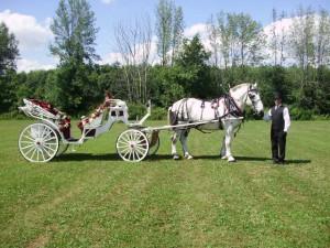 wig-sct-ryyn-horses-016